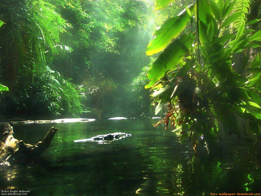 pics photos backgrounds amazon river backgrounds amazon