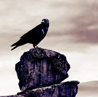 birds-1416715_640