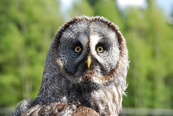 owl-1123181_960_720