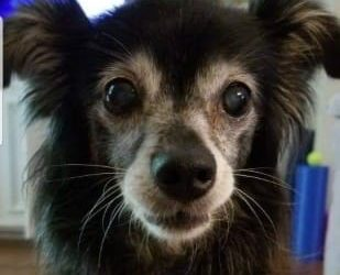 How Healy Frequencies & CBD Oil Have Helped One Sweet Aging Dog Companion