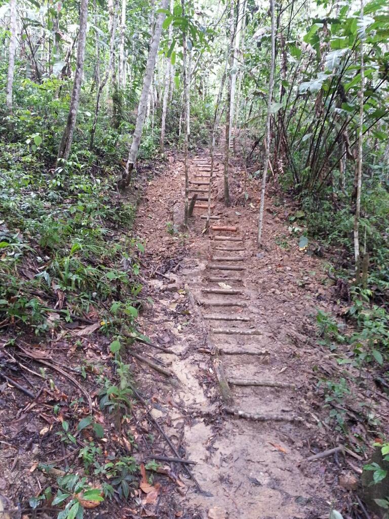 Sacred Plant Medicine:  My 11 Day Peruvian Amazon Intensive
