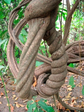 A Different Ayahuasca Experience: Honoring the Mother Plant