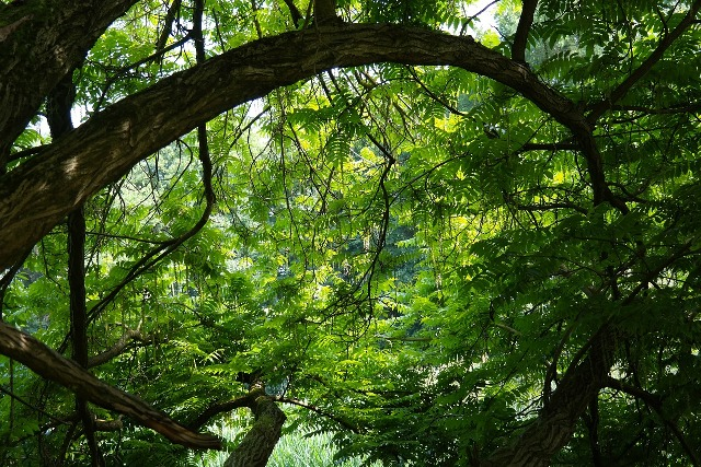 Lessons in Vulnerability & Receiving…From A Tree!